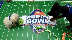 puppy bowl 2021 Live Stream